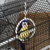 PawHut Jaula para Pájaros de Metal con Comederos Perchas Columpio y Bandeja Extraíble para Canarios Periquitos 39x34x47 cm Negro(m-6)